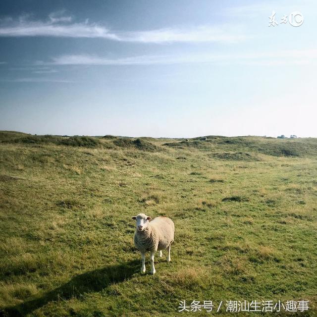 未来6月,属羊的人的运势如何?
