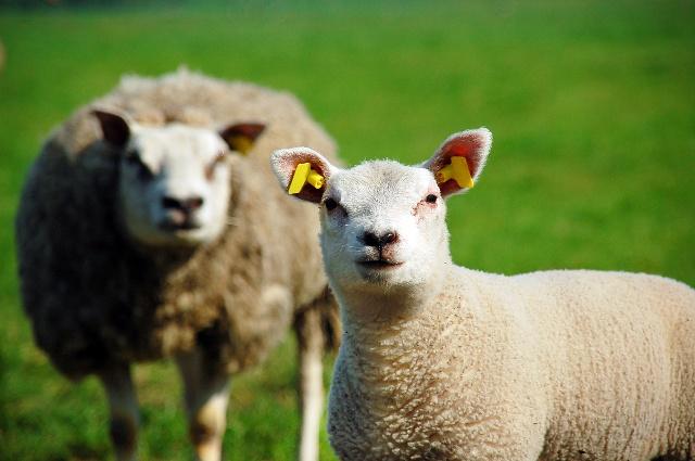 属羊人2018年运程如何?