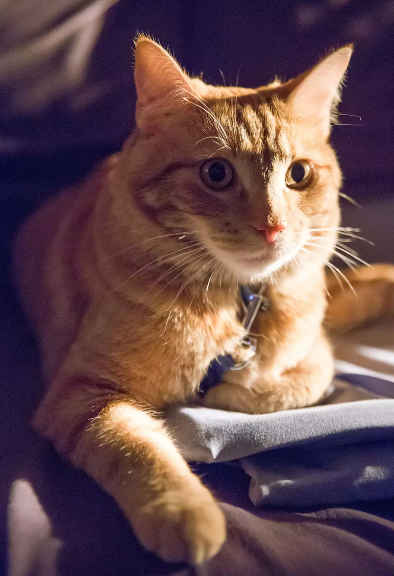 豆瓣评分8.3,《流浪猫鲍勃》到底靠什么得到如此多的好评?